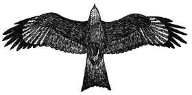 Ptaki Drapieżne Cz 1