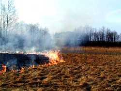 Pożar łąk (fot.M.K)
